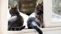 Consejos para introducir otro gato en casa