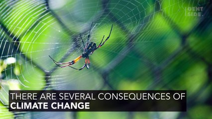 Global Warming: The Surprising Reason Spiders Are Becoming More Aggressive