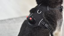 Dog-Riding Connected Camera Lets Owners Keep Tabs On Their Pets