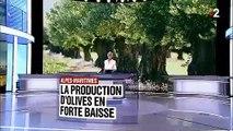 Alpes-Maritimes : inquiétude chez les producteurs d'olives