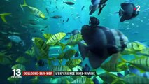 Boulogne-Sur-Mer : à la découverte du plus grand aquarium d'Europe