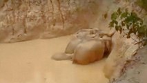 Elefanten aus Schlammkrater gerettet