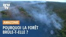 Pourquoi la forêt amazonienne brûle-t-elle ?