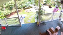 Bear Steals Dog Food Package off Family's Porch