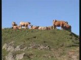 Les Puys Griou, Mary... Cantal