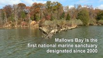 WWI ghost fleet becomes first US national marine sanctuary since 2000