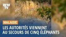 Malaisie: les autorités sauvent des éléphants coincés dans une mare