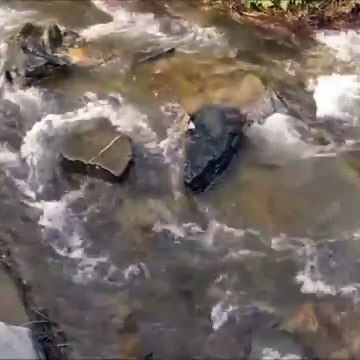 Relaxing Outdoor forest river water with sound