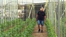 Insekten statt Chemie in Spaniens Mega-Monokulturen