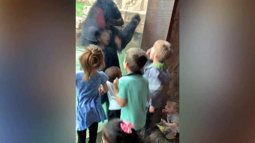 Un oso y unos niños 'saltan de alegría' creando un momento único