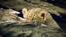 AN AMBUSH OF LION PRIDE - Unequal Battle Between Predator vs Herbivore In Africa