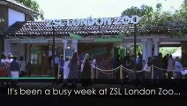 ZSL London Zoo hosts its annual animal weigh-in