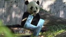 Le panda géant Bei Bei fête ses quatre ans avant de rentrer en Chine