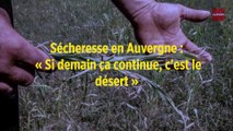 Sécheresse en Auvergne : « Si demain ça continue, c'est le désert »