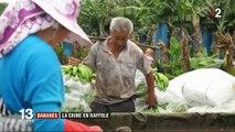 Bananes : la Chine en raffole