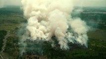 Incendies en Amazonie : le poumon vert de la planète part en fumée