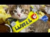 Disney Pixar's WALL-E (Cute Kitten Version)