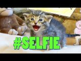 -SELFIE (Official Cat Music Video) - The Chainsmokers PARODY -LOLCAT