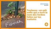 Toulouse : on sait enfin qui a écrit le nom des herbes folles sur les trottoirs
