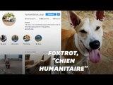 """Foxtrot, le """"chien humanitaire"""", qui sensibilise au sort des Rohingyas"""