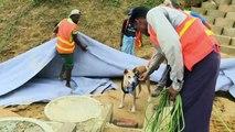 Foxtrot, le chien humanitaire qui essaie de maintenir l'attention du monde sur les Rohingya