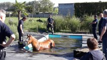 Kain cheval tomber dans une piscine rue Greg Decorte 24.08.2019