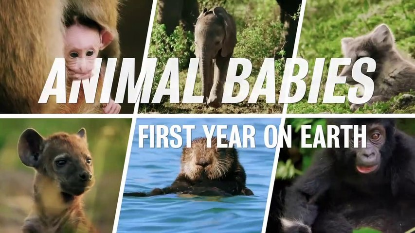 2019 Animal Babies: First Year on Earth - Episode 2of3 HD