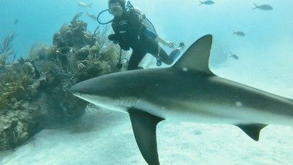 Scuba Diving with Sharks - Bahamas