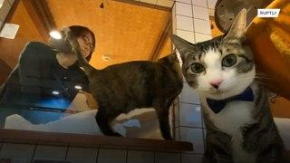 أهلا بكم في فندق القطط في اليابان !!!