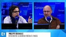 """Virus de la tomate : Philippe Reignault estime que """"le niveau de vigilance doit être maximum"""""""