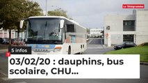 Dauphins, bus scolaire, CHU... Cinq infos bretonnes du 03 février