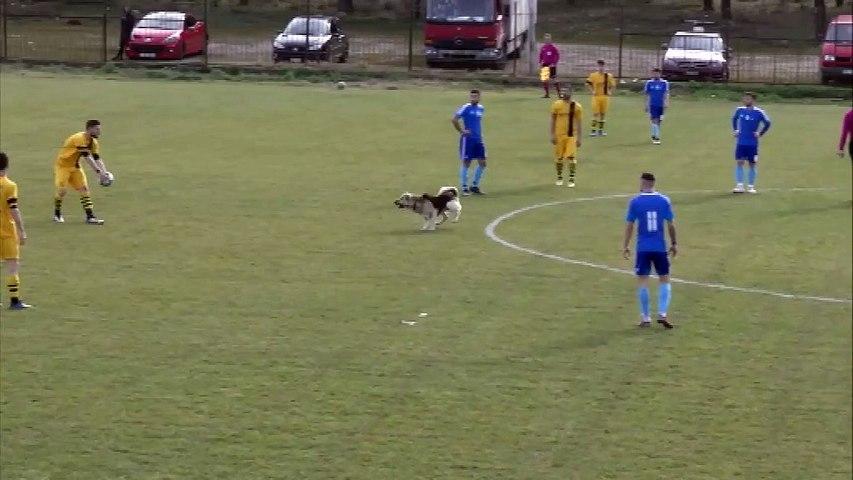 Είσοδος σκύλου στον αγώνα Κιθαιρώνας Καπαρελλίου-Παλληνιακός 1-0.
