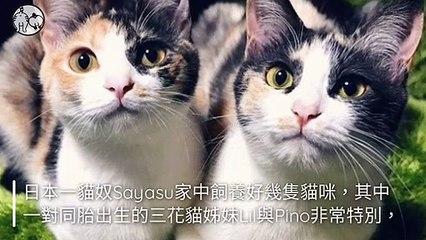 CollectionVideo-petmao_curation-petsmao.nownews-copy4-PetsMaoParser-2020/02/04-09:30