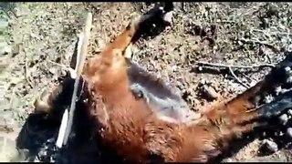 Cabra é estuprada e morta no Sertão da Paraíba