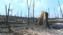 Triste spectacle en Amazonie après le passage des flammes