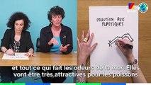Le Papier Crayon spécial #LePlastiqueNonMerci avec la présidente de WWF France et Coco