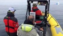 Écosystème marin :  une campagne d'observation scientifique pour mieux connaître les baleines