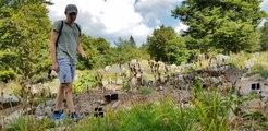 Le jardin alpin du Haut Chitelet (Hautes Vosges) souffre de la chaleur et de la sécheresse