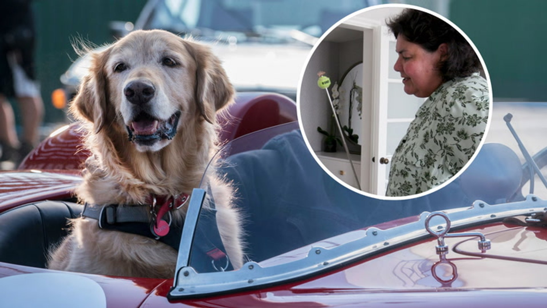 How dogs are trained for movies and TV