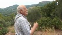 Sécheresse : les producteurs d'olives font grise mine