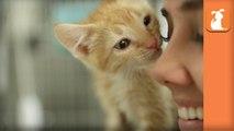 Holding Kittens In Your Arms Is Pure Magic - Kitten Love
