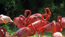 Behold The 150-Million-Year-Old 'Flamingos'