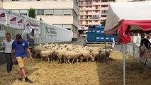 Les agriculteurs murent la préfecture des Hautes-Alpes