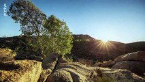 Le monde des arbres d'Afrique australe. 5/5. Le figuier brise-roche