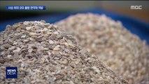 진주 '껍데기'를 한약재로…3천 톤 밀반입 '덜미'