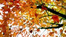 Autumn Adventure! Annual Interactive Map Released Showing The Best Time & Place To View Fall Foliage!