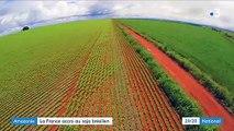Amazonie : la France est-elle également responsable de la déforestation ?