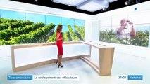 Vins français : le soulagement des viticulteurs après le compromis trouvé au G7 sur la taxe Gafa