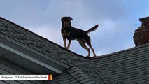 This CT Dog Was Rescued After Getting Stuck On A Roof