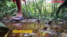 Brésil : la tribu Waiapi menacée de disparition